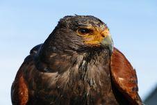 Free Animal, Avian, Beak Stock Photo - 109884940