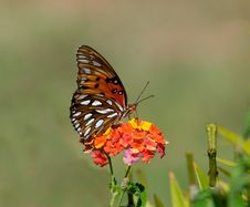 Free Shallow Focus Photography Of Brown And White Butterfly On Orange And Yellow Flowers During Daytime Royalty Free Stock Images - 109885529