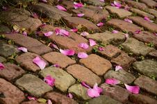 Free Pink Flower Petals On Brown Brick Way Stock Photography - 109885562