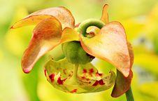 Free Macro Photography Of Orange And Green Flower Stock Image - 109885591