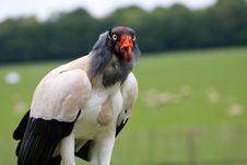 Free White Black And Orange Bird Selective Focus Photography Stock Photo - 109885630