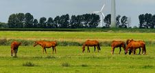 Free 6 Horses On Green Field During Daytime Stock Images - 109885654