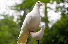 Free White Dove On White Bird Figure Stand Royalty Free Stock Photography - 109885757