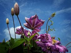 Free Purple Flowers Under Cloudy Sky In Worms Eye View Photography Royalty Free Stock Image - 109885766