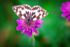 Free White Brown Butterfly Perched On Purple Flower Stock Photos - 109885863