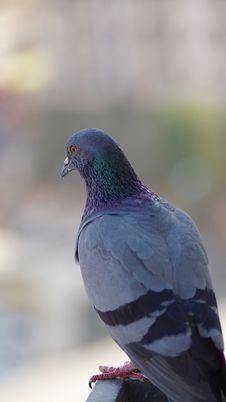 Free Animal, Photography, Avian Royalty Free Stock Photography - 109886887