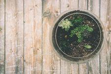 Free Board, Botanical, Cactuses Stock Images - 109886904