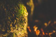 Free Close Up Shot Of Green Moss Royalty Free Stock Photo - 109886925