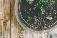 Free Botanical, Glass, Growth Stock Photo - 109887050