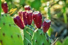 Free Blur, Botanical, Cacti Royalty Free Stock Photo - 109887295