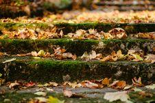 Free Autumn, Leaves, Blur Royalty Free Stock Photos - 109887308