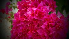 Free Red Flowers Stock Image - 109887321