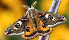 Free White Brown And Orange Moth Stock Image - 109887381