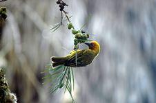 Free Animal, Avian, Beak Royalty Free Stock Photo - 109887445