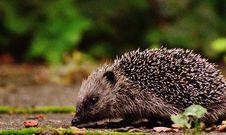 Free Animal, Blur, Close-up Stock Image - 109887471