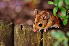 Free Brown Rodent On Gray Fence Beside Green Leaved Plants Under Sunny Sky Royalty Free Stock Images - 109887489