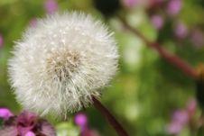 Free Dandelion In Macro Shot Photography Stock Image - 109887491