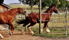 Free 2 Red And White Horses Beside Barn And Green Grasses And Trees Royalty Free Stock Photo - 109887765
