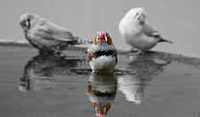 Free Animal, Avian, Beak Royalty Free Stock Images - 109887849