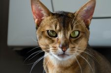 Free Shallow Focus Photography Of Brown And White Cat Royalty Free Stock Photos - 109887908