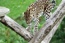 Free Animal, Photography, Big Royalty Free Stock Photography - 109887917