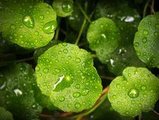 Free Blur, Close-up, Depth Stock Photography - 109888232