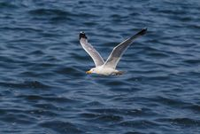Free Seagull Flying Over Ocean Royalty Free Stock Photo - 109888265