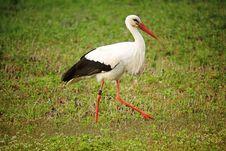 Free Animal, Avian, Bird Royalty Free Stock Photo - 109888585
