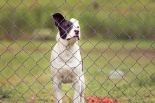 Free Animal, Canine, Cute Royalty Free Stock Images - 109888629