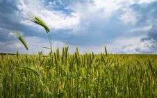 Free Cropland Stock Images - 109888644