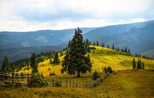 Free Pine Trees Field Near Mountains During Daytime Royalty Free Stock Photo - 109888665