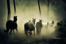 Free Group Of Horse Running Stock Photos - 109888763