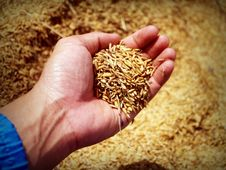 Free Abundance, Agricultural, Agriculture Royalty Free Stock Photo - 109888835