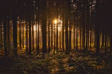 Free View Of Black Trees And Sun Royalty Free Stock Photo - 109889185