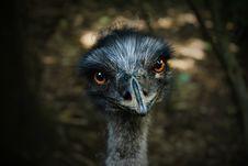 Free Adorable, Animal, Photography Stock Photos - 109889233