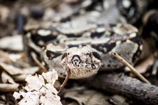 Free Photography Of Gray And Brown Snake Royalty Free Stock Photography - 109889257