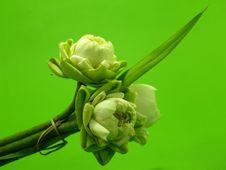 Free Aquatic, Bloom, Blooming Royalty Free Stock Photos - 109889258