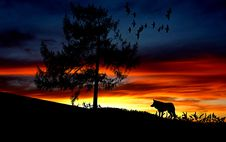 Free Silhouette Dog On Landscape Against Romantic Sky At Sunset Stock Photo - 109889270