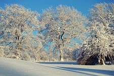 Free Trees Against Clear Sky During Winter Royalty Free Stock Photo - 109889325