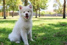 Free Close-up Of Dog On Grass Stock Photography - 109889332