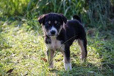 Free Dog On Grass Stock Photography - 109889402