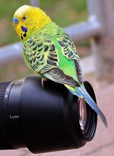 Free Close-up Of Bird Stock Image - 109889421