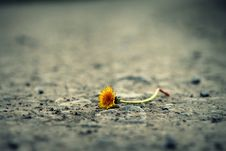 Free Close-up Of Flower On Sand Royalty Free Stock Photography - 109889647
