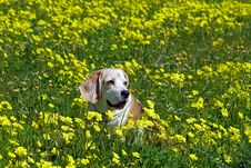 Free Animal, Bloom, Blossom Royalty Free Stock Images - 109890079