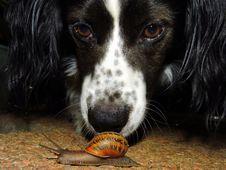 Free Adorable, Animal, Breed Royalty Free Stock Photo - 109890125