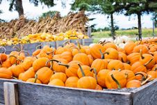 Free Agriculture, Autumn, Cropland Stock Images - 109890234