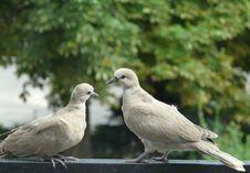 Free Animal, Avian, Beak Stock Photos - 109890243