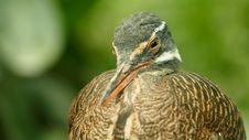 Free Animal, Avian, Beak Royalty Free Stock Image - 109890256