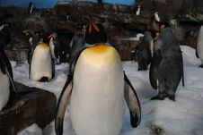 Free Animal, Antarctic, Bird Stock Image - 109890621