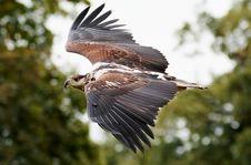 Free Animal, Avian, Beak Stock Image - 109890741